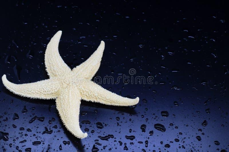 Starfishnahaufnahme auf dunkel-blauem Hintergrund, Wassertropfen, Meerestiere, Konzept des Restes in den tropischen Ländern stockbilder