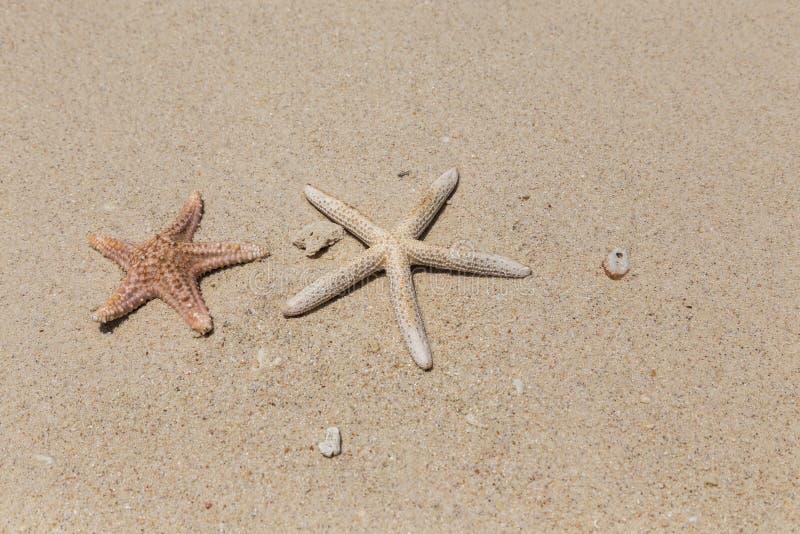 Starfishs on sandy beach royalty free stock photography