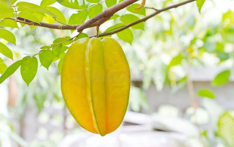 starfruit стоковое фото