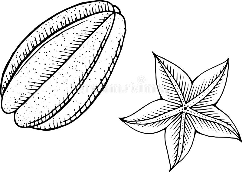 Download Starfruit Coloring Page Line Art For Books Adults Stock Vector