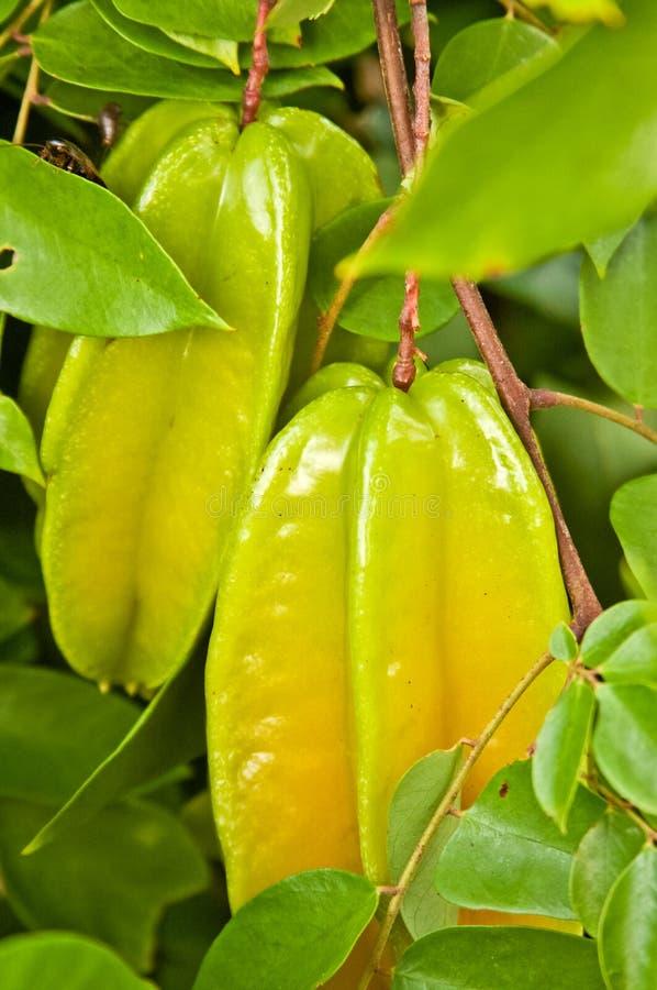 Starfruit na árvore fotos de stock
