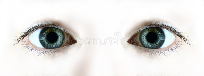 Download Staring stock photo. Image of lens, lashes, face, sense - 126974