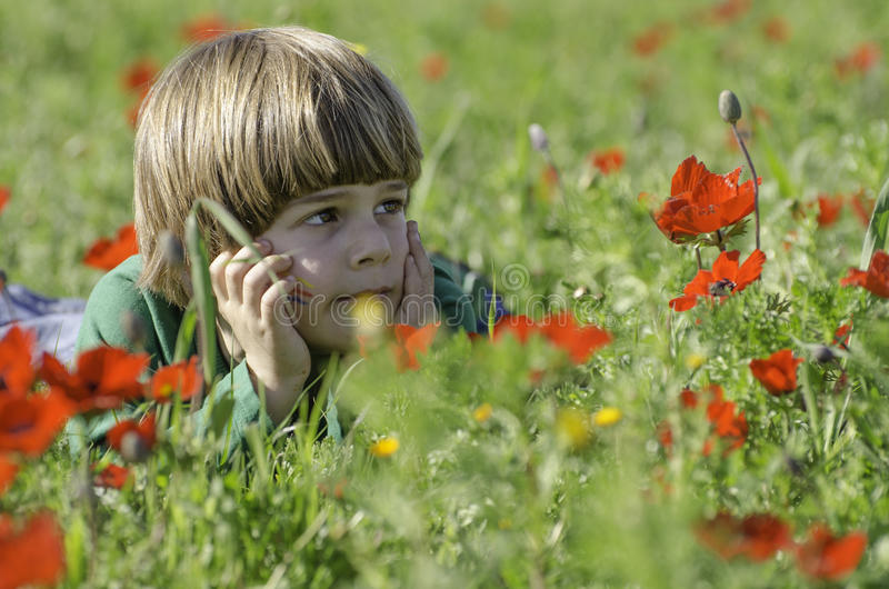Staring at an Anemones field. A cute kid staring at an Anemones field royalty free stock images
