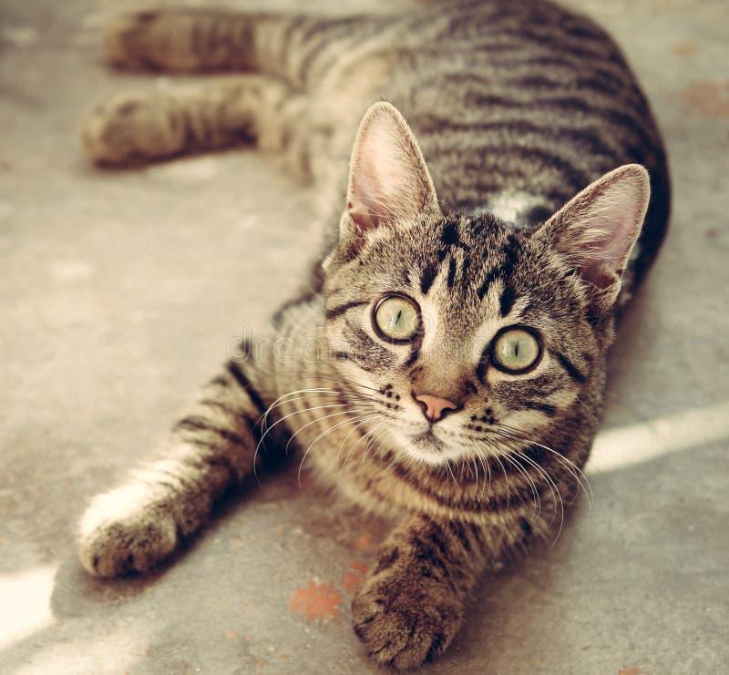 Staring Cat Free Public Domain Cc0 Image