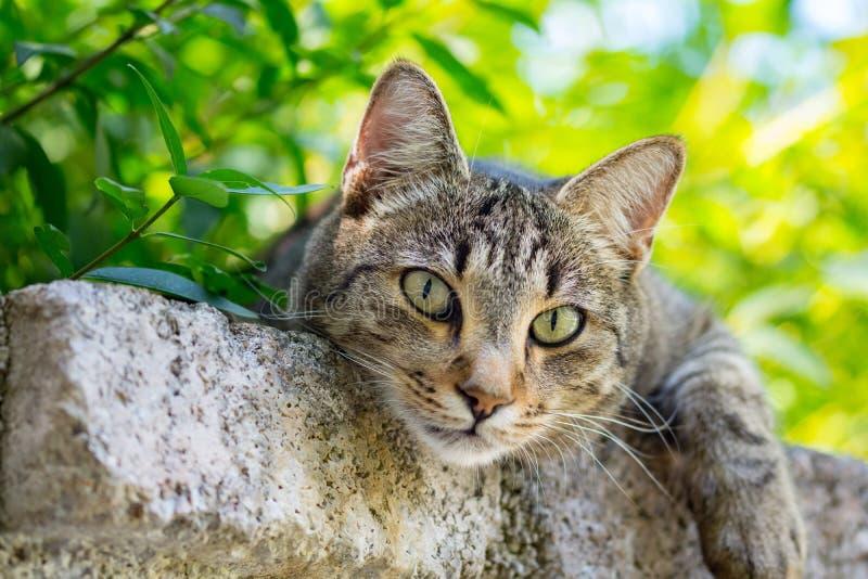 Staring cat royalty free stock photo
