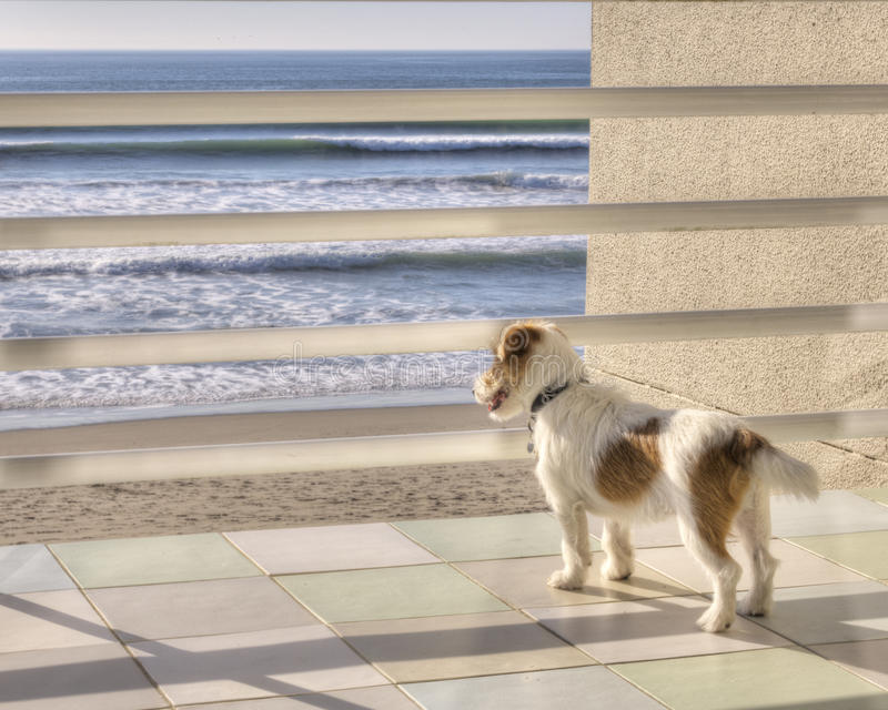 Download Staring out to sea stock photo. Image of cute, deck, russell - 30606714