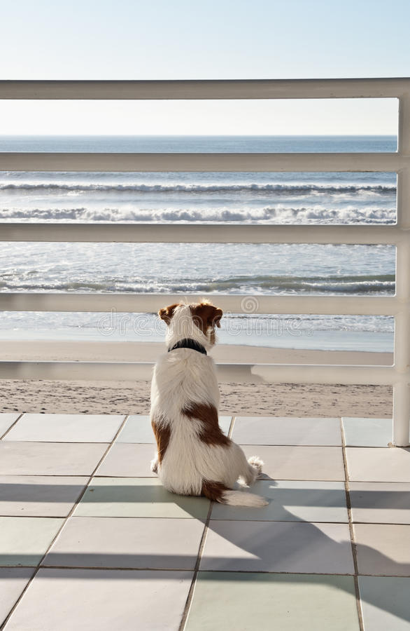 Download Staring Out To Sea Royalty Free Stock Photo - Image: 30606715