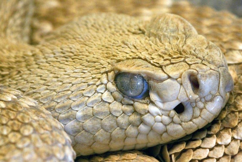 Download Staring Snake's Eye, Close-up Stock Photo - Image: 12751130