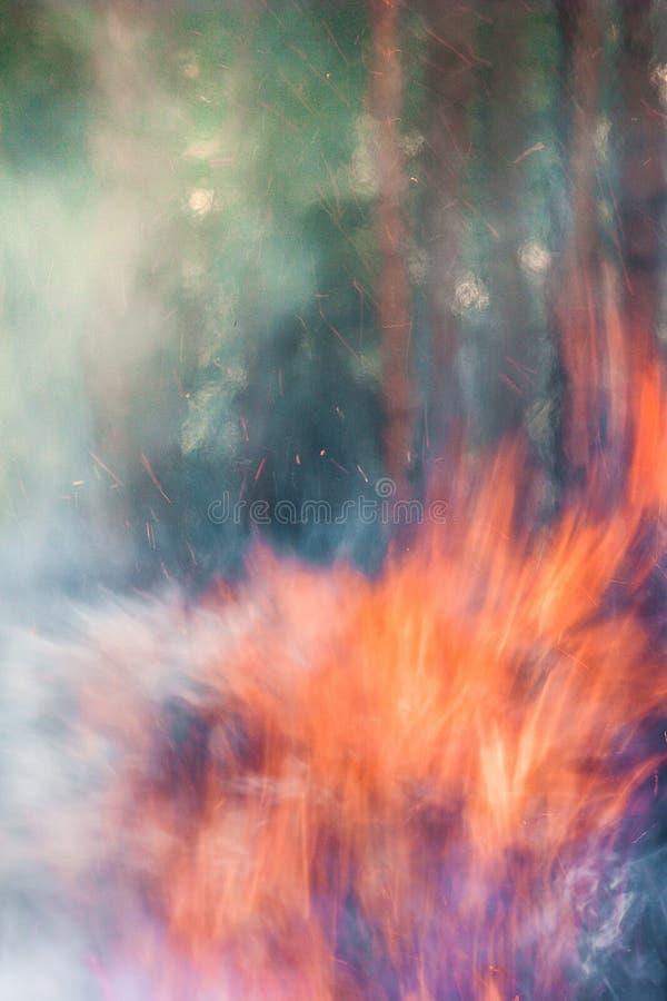 Stark brand i skogen, rök, smog, brände forestn arkivbild
