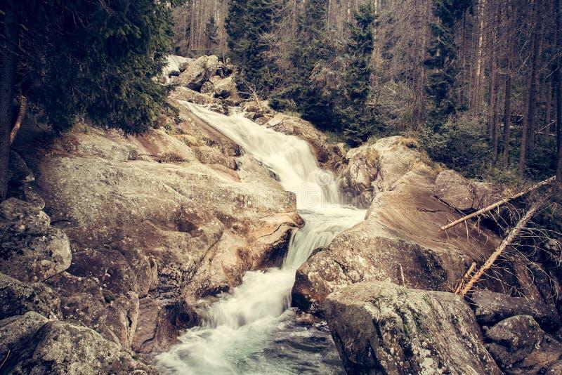 Stark flodström i skog royaltyfri bild