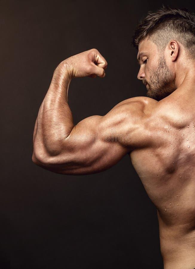 Stark idrotts- mankonditionmodell som poserar tillbaka muskler, triceps, arkivfoto