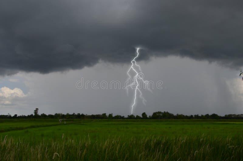 Stark lightening över träden i grön risfält royaltyfria foton