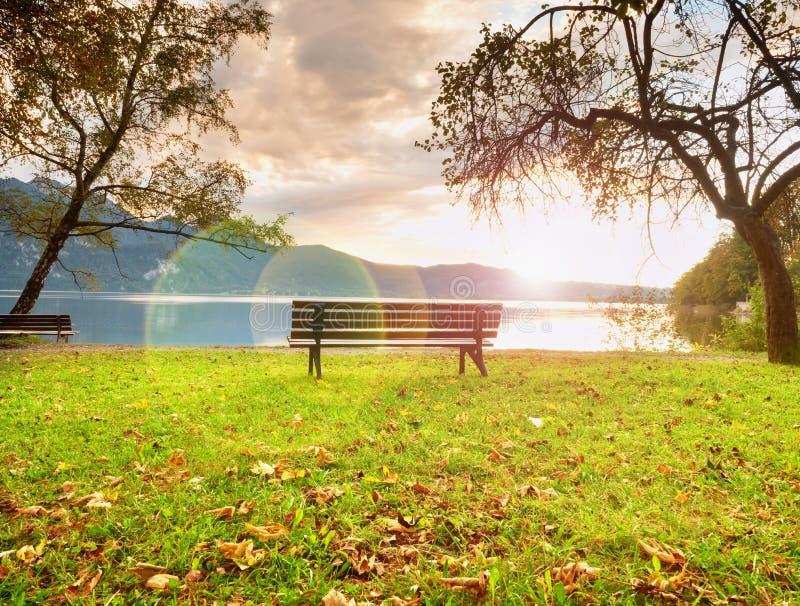 Stark signalljusdefekt, bänk på bergsjön Dammbankträd, arkivbild