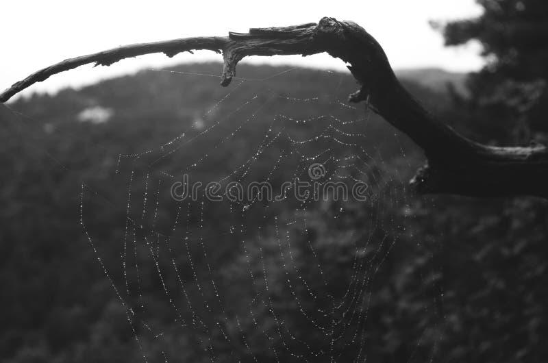 Stark spindelrengöringsduk arkivbilder