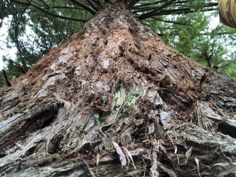 So stark wie ein Baum stockfoto