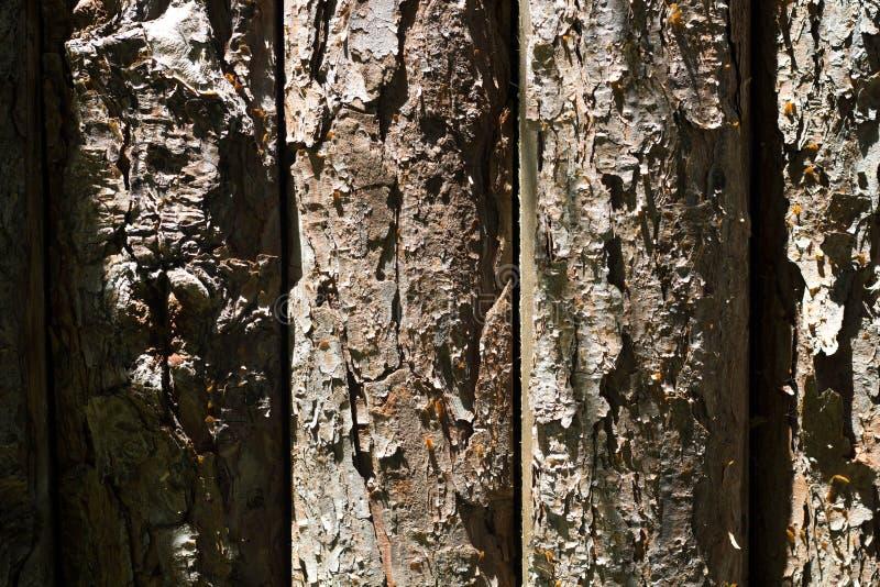 Stark Wood bakgrund arkivbild