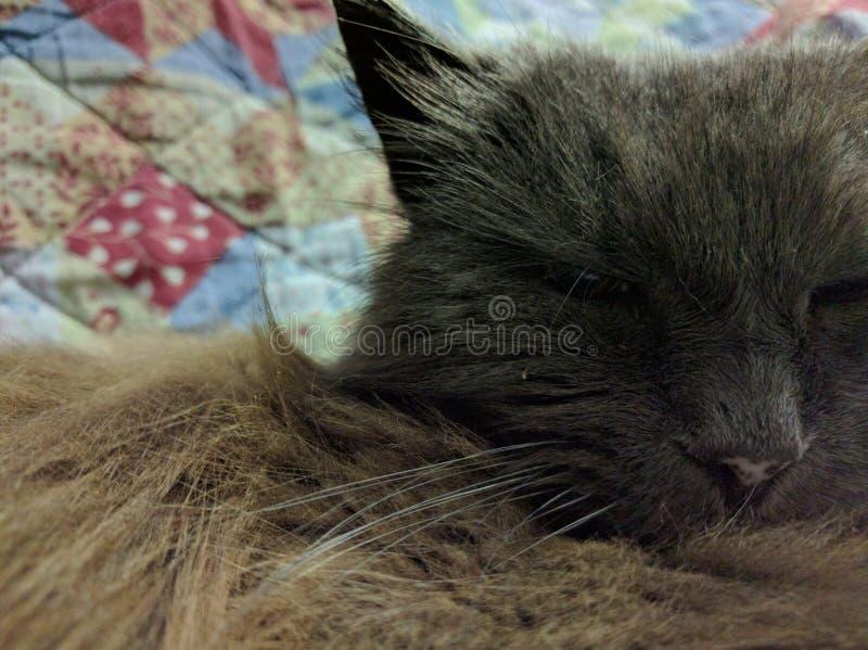 Starke alte Katze lizenzfreie stockfotografie