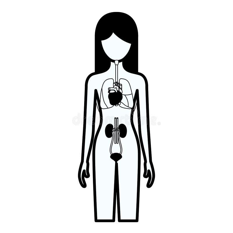 Starke Kontur des schwarzen Schattenbildes der weiblichen Person mit System der inneren Organe des menschlichen Körpers vektor abbildung