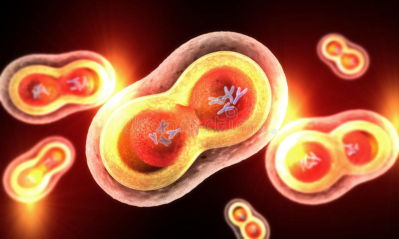 Starke Verbreitung von transparenten Zellen, von Kern, von Zellmembran und von sichtbaren Chromosomen stock abbildung