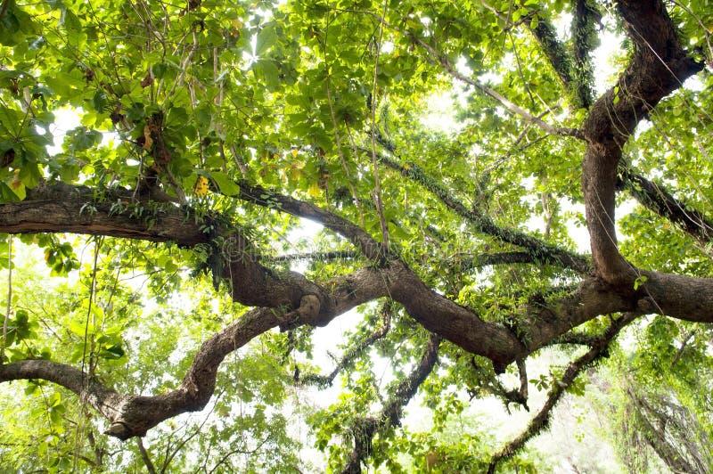 Starker Dschungel lizenzfreies stockbild
