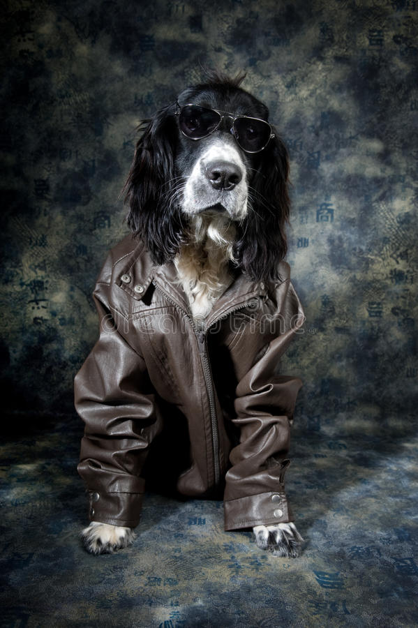 Starker Hund lizenzfreies stockfoto