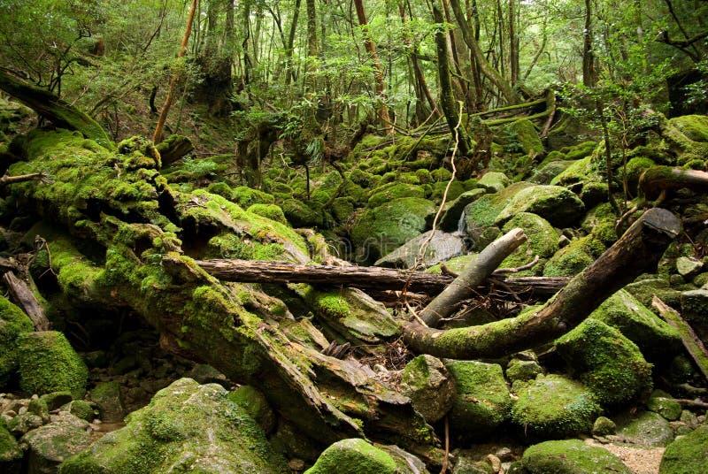 Starker japanischer Wald lizenzfreie stockfotografie