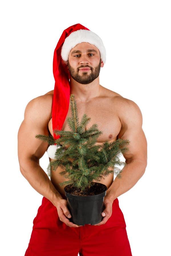 Starker nackter junger Kerl am Santa Claus-Hut mit Weihnachtsbaum in seiner Hand stockfoto