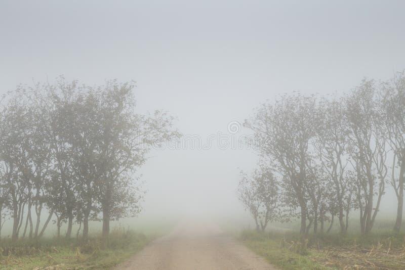 Starker Nebel auf einer Landstraße mit Bäumen auf beiden Seiten stockbild