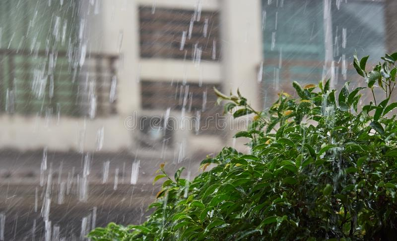 Starker Regen und nasser Baum außerhalb des Hauses stockfotografie