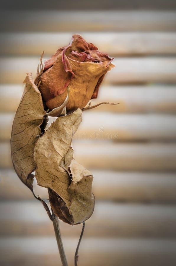Starkes Liebes-für immer Symbol, abstrakt mit roter Rose stockbilder