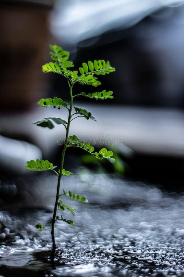 Starkt litet ogräs som växer i suddig bakgrund för hård miljö royaltyfria foton