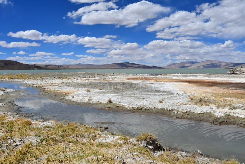 Starkt salthaltig sj?Ruldan Nak i Tibet, Kina royaltyfria bilder