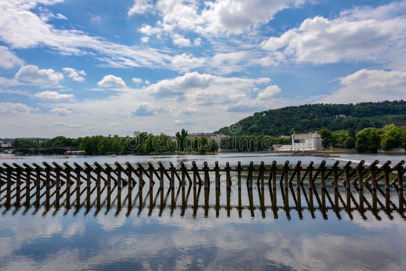 Starling на реке Влтавы в Праге, чехии стоковые изображения rf