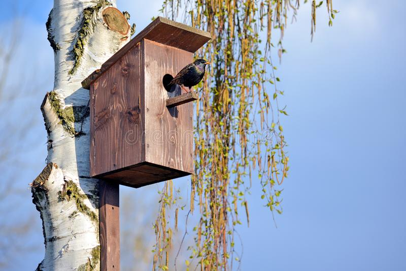 Starling на birdhouse стоковые фото