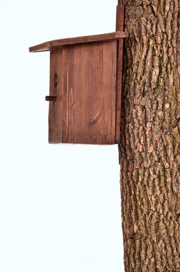 Starling-casa de madera en un tronco aislado imagenes de archivo