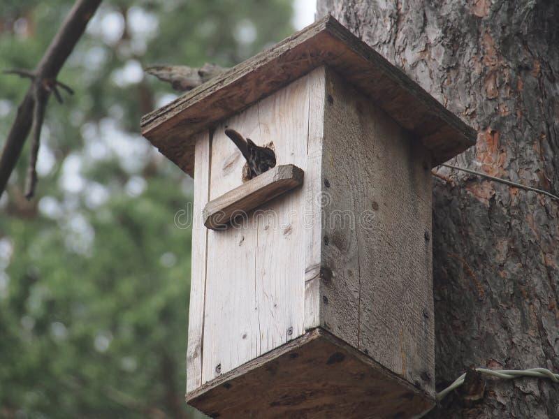 Starling dichtbij het vogelhuis Kunstmatige bird& x27; s nest stock fotografie
