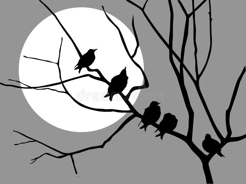 Starling en la ramificación stock de ilustración