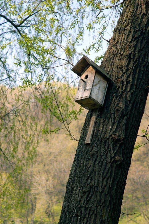 Download Starling-Haus stockbild. Bild von nest, vogel, zufuhr, nave - 863593