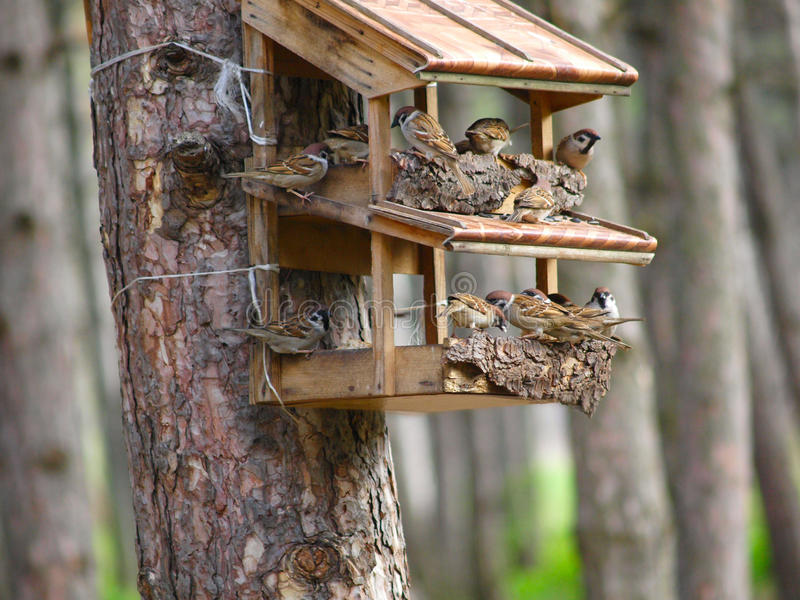 A starling house for birds stock photos