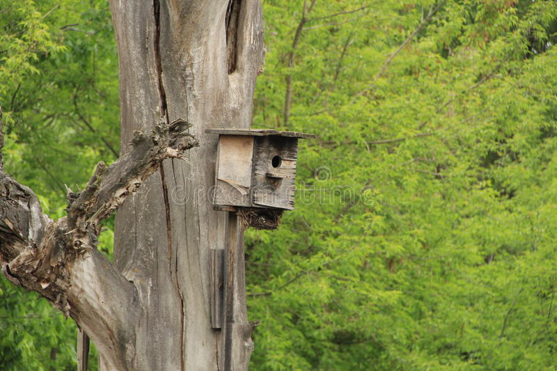 Starling house for birds royalty free stock image