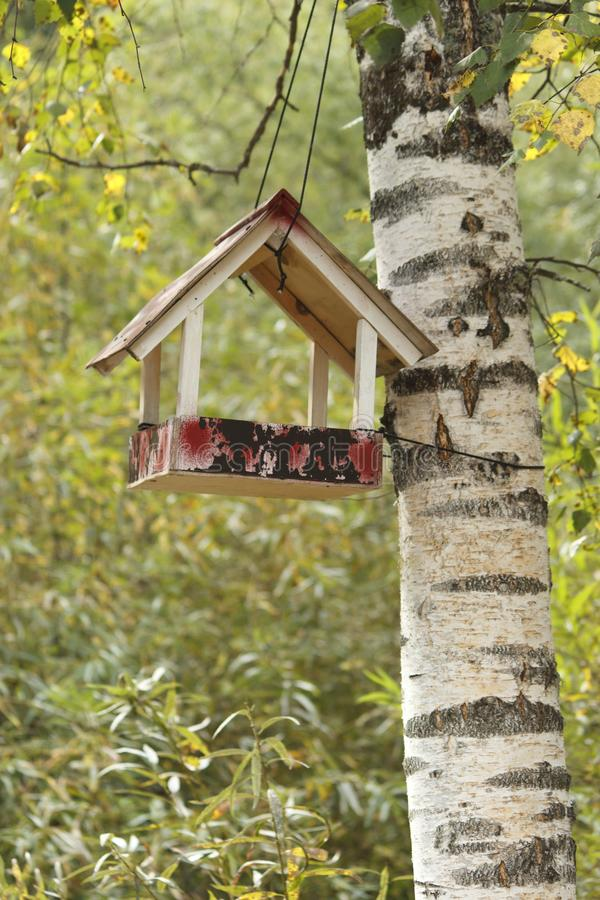 Starling house on tree in autumn park. Nesting box, starling house on tree in autumn park royalty free stock photo