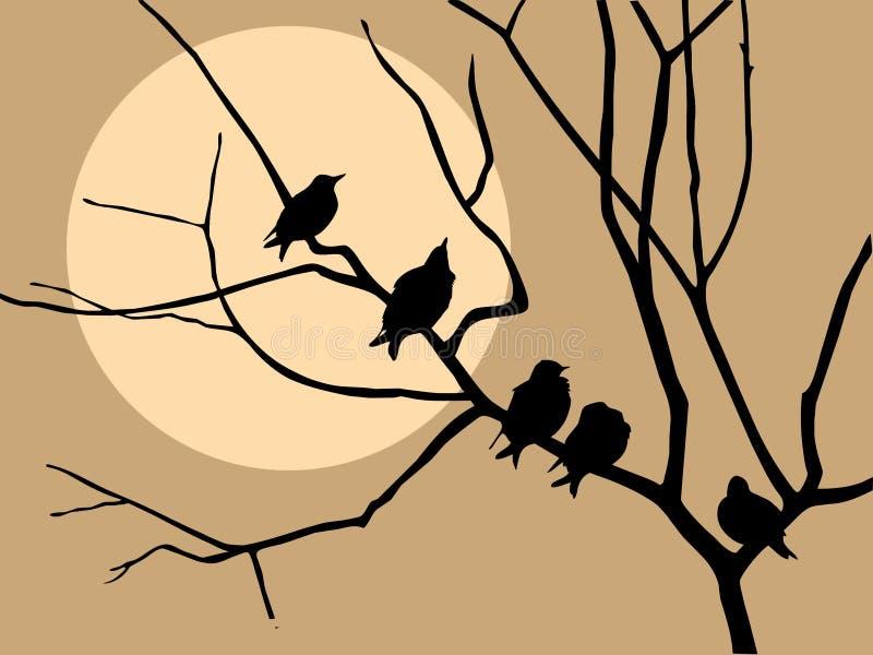 starling na árvore ilustração royalty free