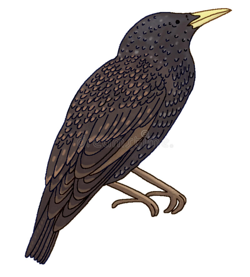 Starling a repéré illustration stock
