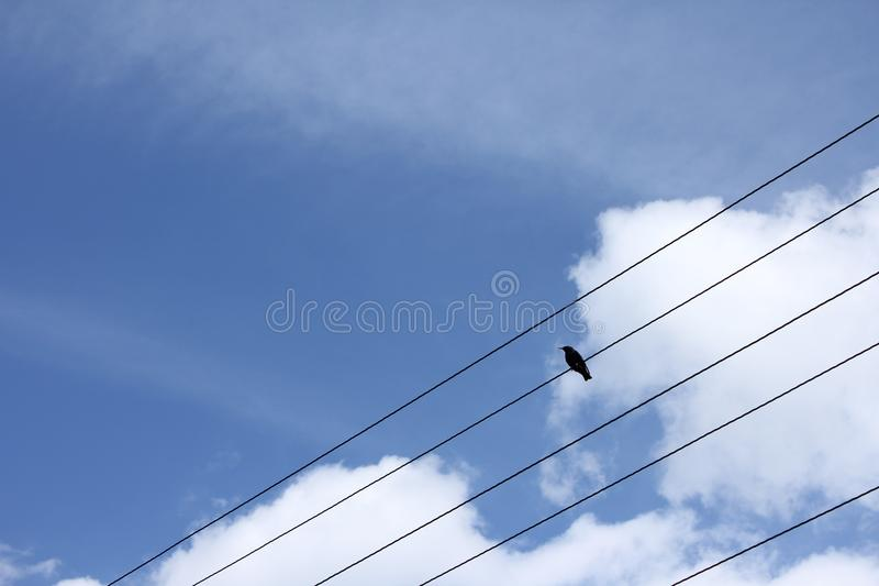 A Starling sitting on a wire. The Starling sits on a wire against a blue sky and clouds royalty free stock images