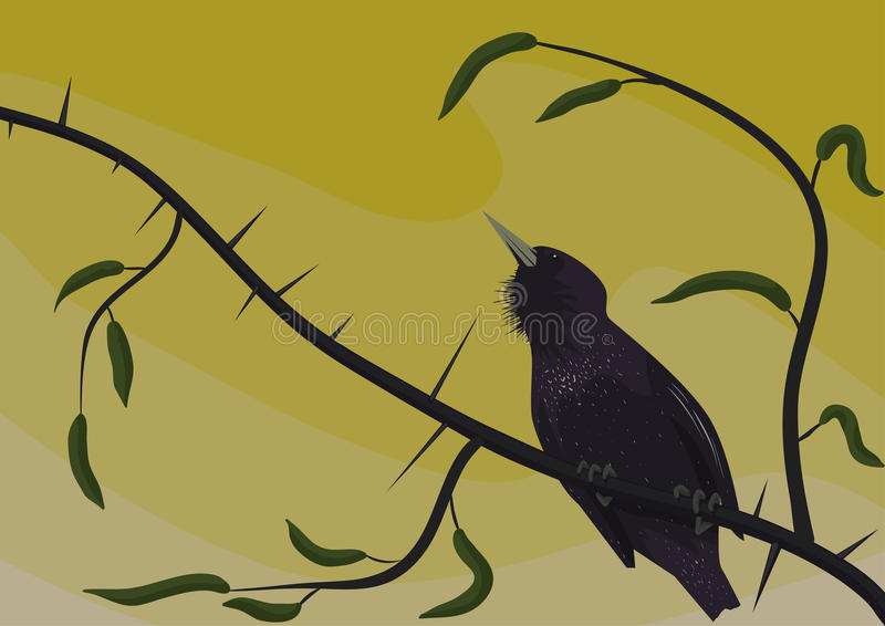 Starling on a sprig prickly stock photography
