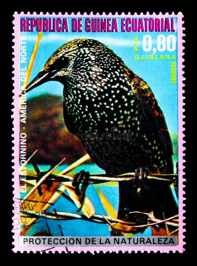 Starling Sturnus vulgaris, North American birds serie, circa 1976. MOSCOW, RUSSIA - JANUARY 2, 2018: A stamp printed in Equatorial Guinea shows Starling Sturnus stock photo