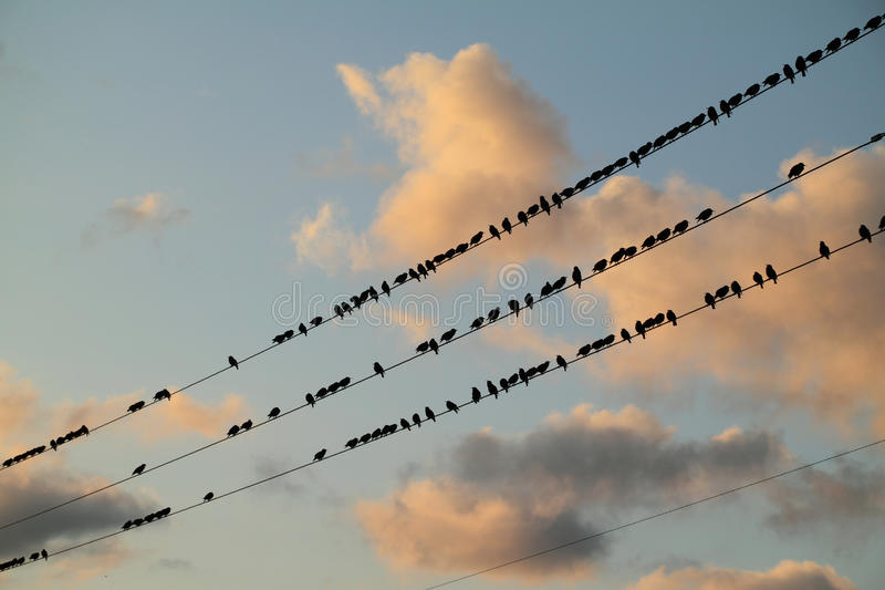 Download Starlings Perched On A Wire. Stock Image - Image: 26382823