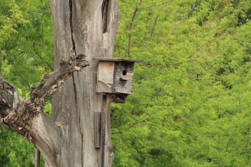 Starlingshuis voor vogels royalty-vrije stock afbeelding