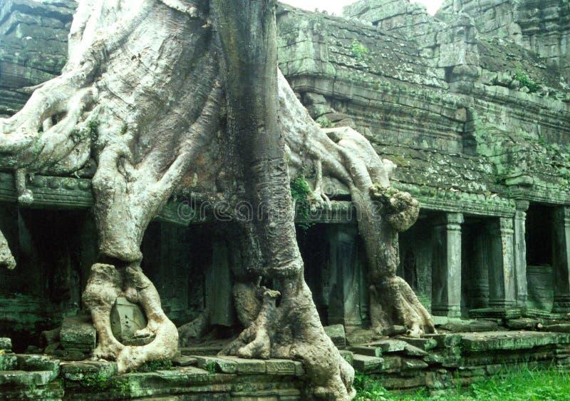 Download Starożytna Przerastająca świątyni Zdjęcie Stock - Obraz złożonej z city, korzenie: 34890