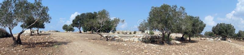 starożytne ruiny obraz stock